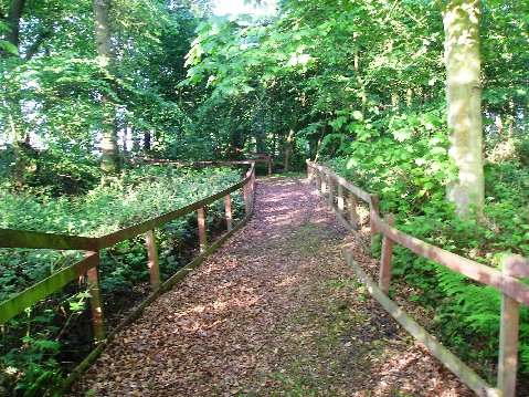Baltree's beautiful woodland walk.